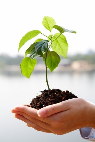 A Charitable Remainder Unitrust allows you to do good things, while still reaping a benefit. A plant and soil in the cupped hands of a woman.